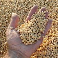 Importações de soja dos EUA pela China disparam no 1º bimestre